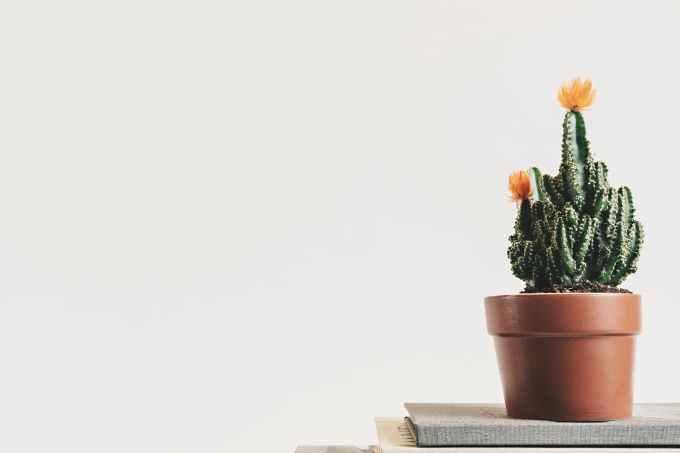 bloom book botanical cactus